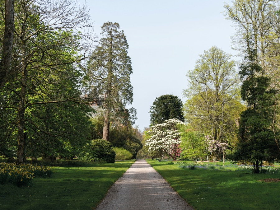 A garden path with trees on either side.