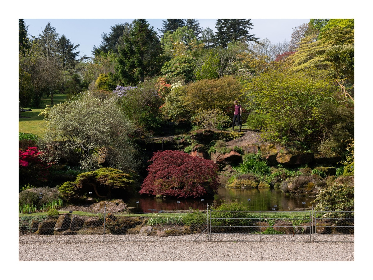 Different colours of shrubbery in the Mount Stuart garden.