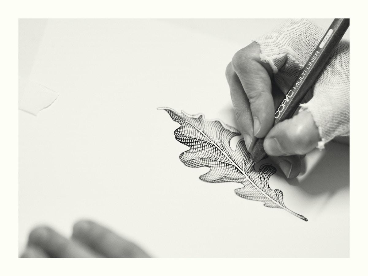 Hand illustrating an oak leaf.